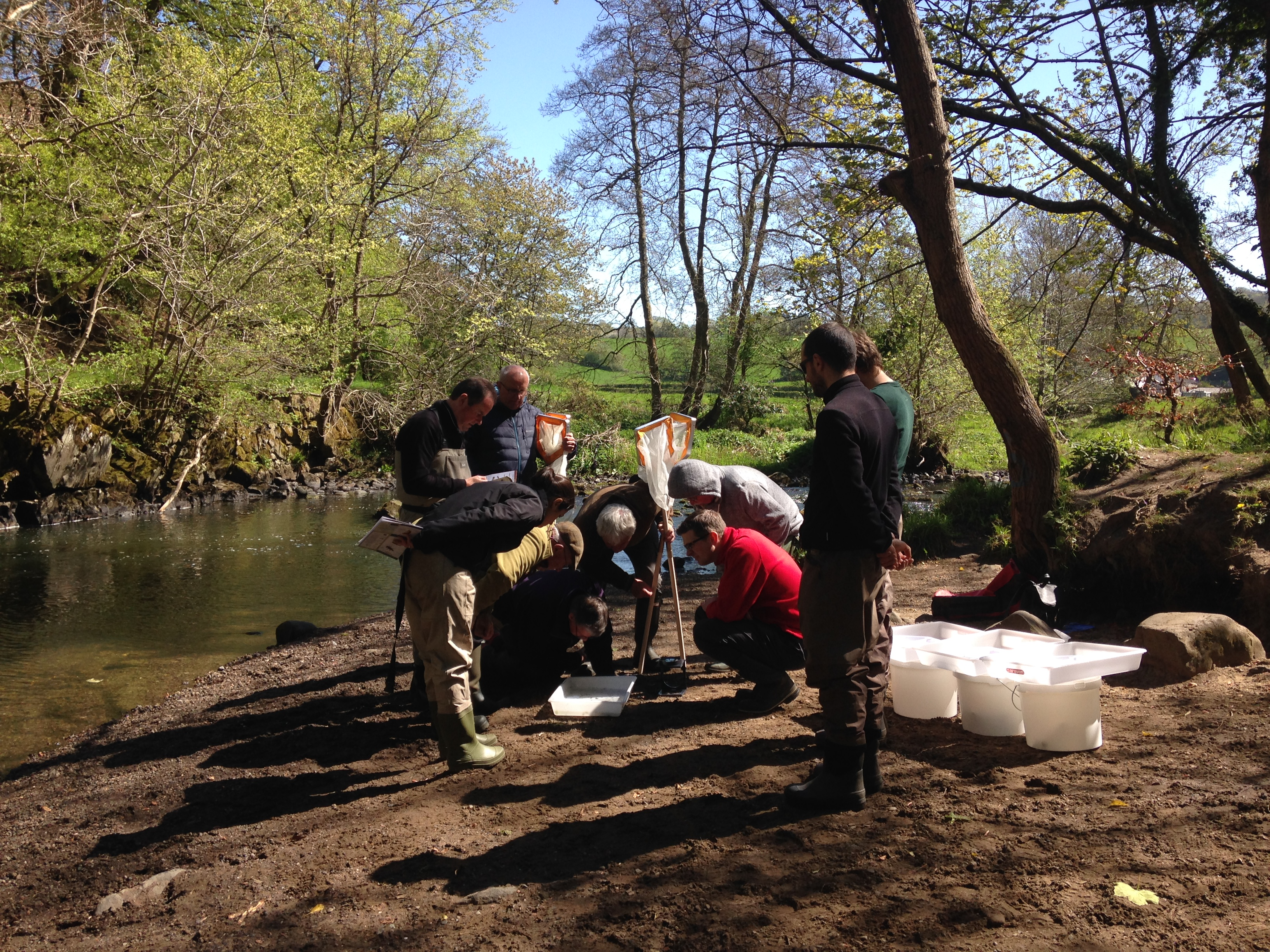 Riverfly monitoring at Muiravonside