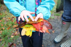 Girl holds a selection of autumn leaves from Blaeberry woods.