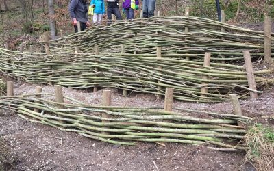 Weaving willow with the Friends of Almondell & Calderwood Country Park