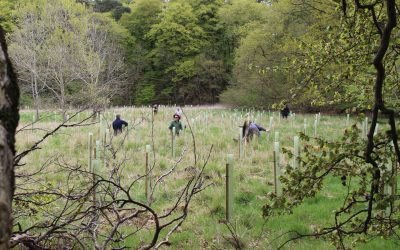 Killandean tree maintenance and the woes of sundries