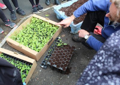 Aspen propagation with primary schools