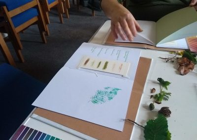 Colour swatches and colourful leaves and other plant finds