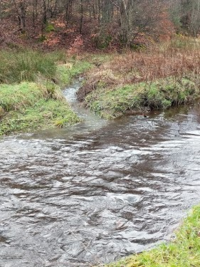 Here you can see the sediment of the burn entering the cleaner water of the Harburn Water