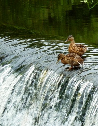 """Andy Brown -- """"You first!"""", Kirkton Weir"""