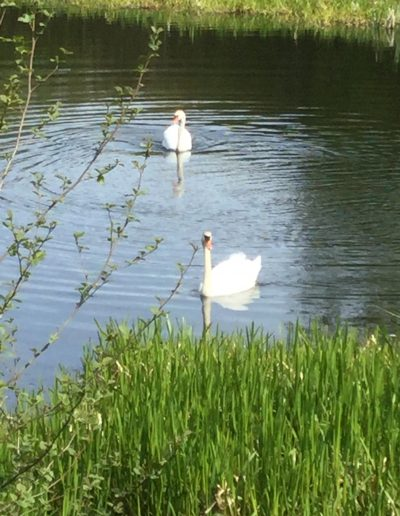 """Elsa -- """"This is a beautiful lake with two swans who have a nest and they have been here for a good couple of years"""", Harwood Water"""