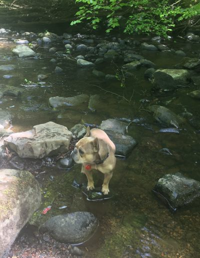 """Alexandra Green -- """"The river looked very dirty with some rubbish but I could see lots of rocks under the water beside my dog"""", Mid Calder"""