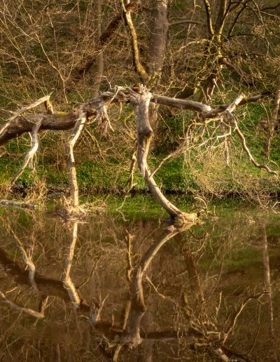 """Craig Graham -- """"I loved the reflections of this old tree"""", Almondell"""