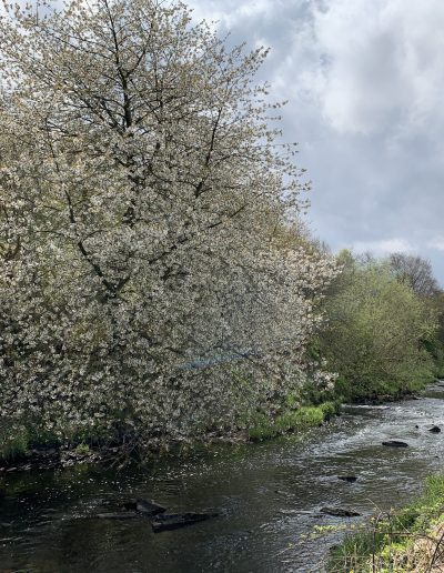 """Ethan McAnish -- """"On the riverbank has been dumped hundreds of plastic bottles.  So sad but if you look past this to the river, it is still beautiful"""", River Almond"""