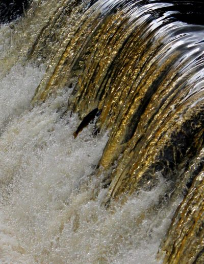"""Andy Brown -- """"Patience required"""", Kirkton Weir"""