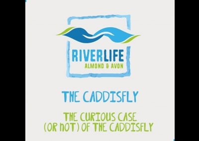 The Caddisfly – Meet the Inverts